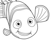 Nemo Says Hi